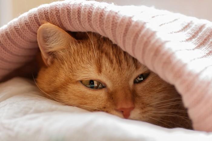 布団に入って寂しそうな表情の猫