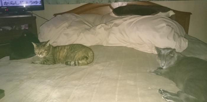3匹そろってベッドでまったり