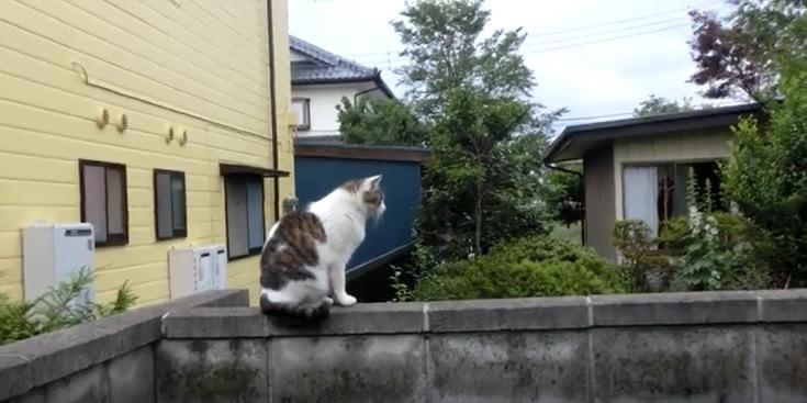 塀の上に座る猫