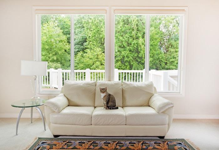 綺麗な部屋のソファーに座る猫