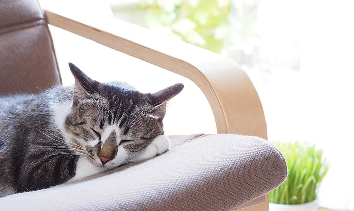 日差しに囲まれてくつろぐ猫