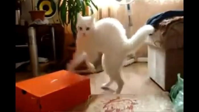 立ちあがる猫