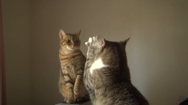 おねだりをする猫