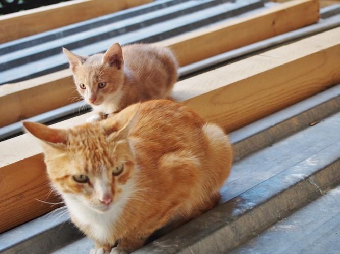 工事現場の猫