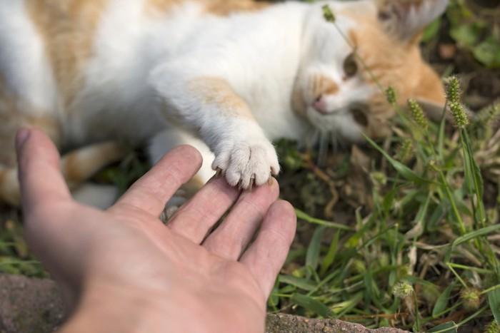 人の手に手を乗せる猫