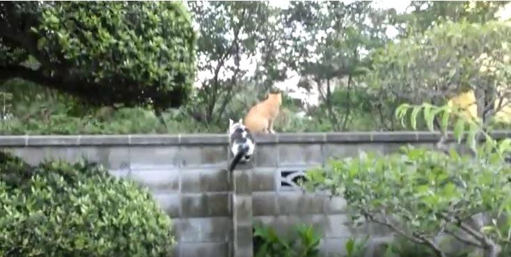 塀の上に登った猫