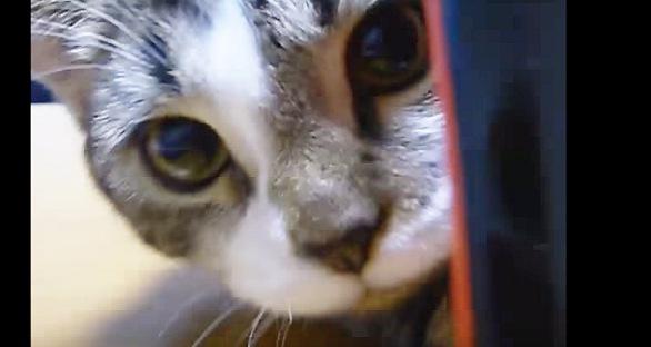 画面いっぱいにこちらを見る猫