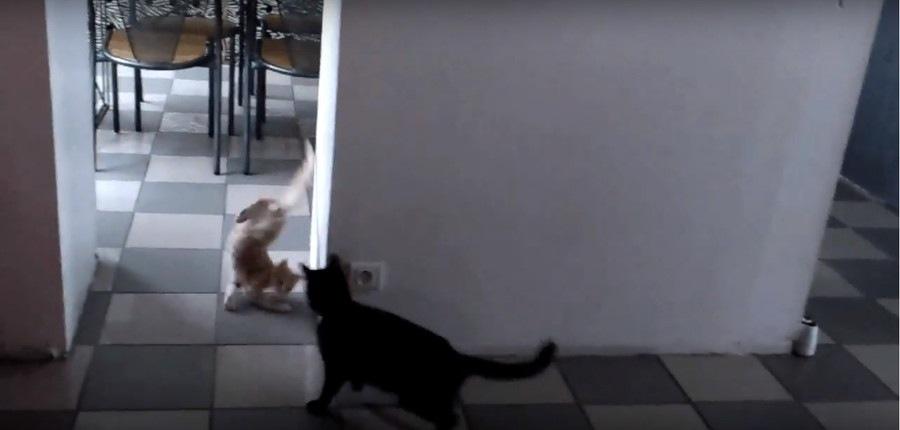 びっくりする子猫