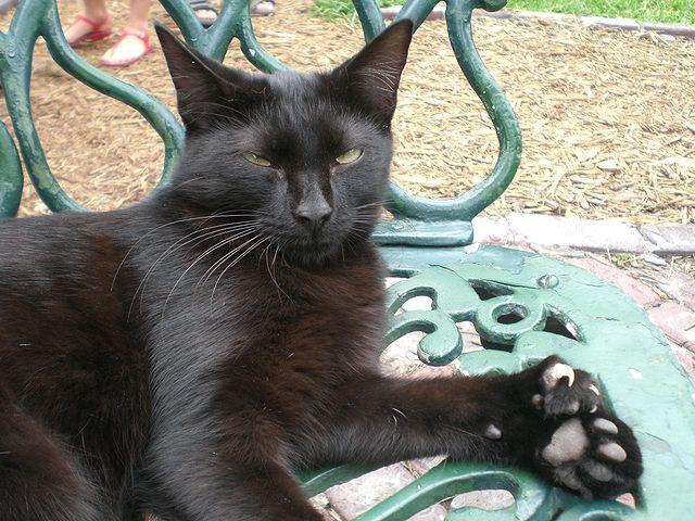 作家ヘミングウェイの多指の猫