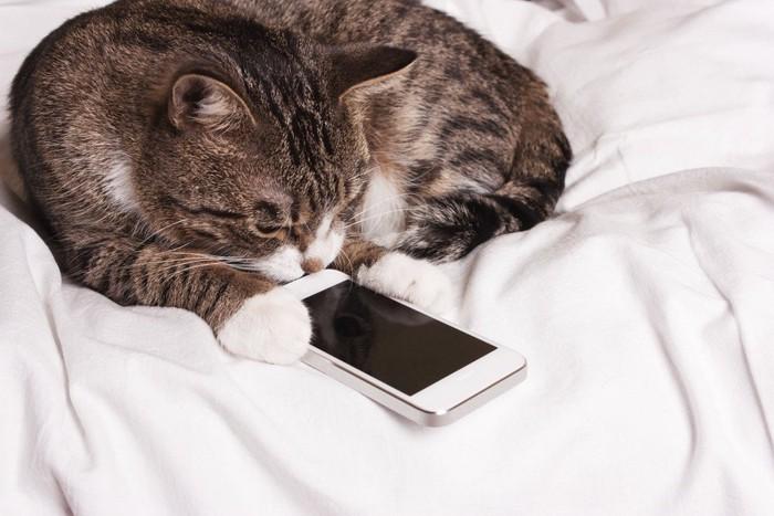 スマホを持ちながら眠る猫
