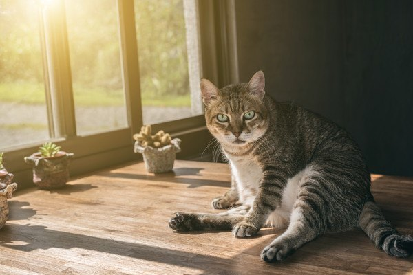 窓際にいる猫