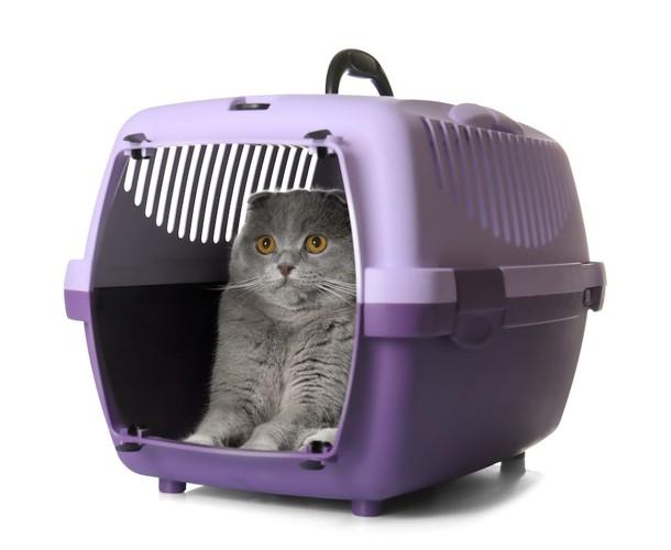 キャリーの中で怖がる猫