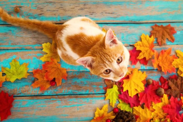 ベンチの上に座る猫と紅葉