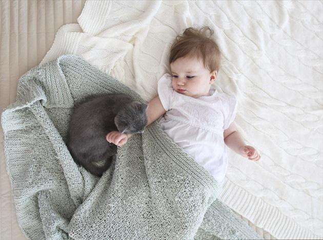 人間の赤ちゃんを見ている猫