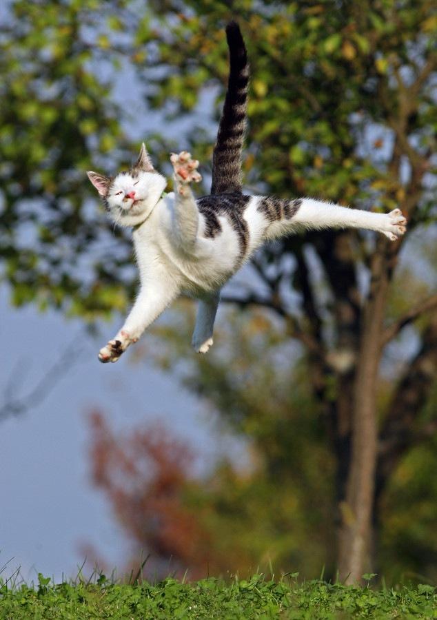 猫びっくりして飛ぶ