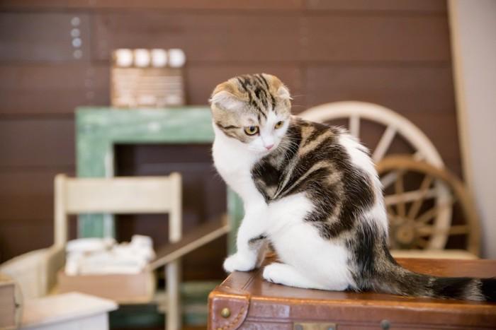 部屋の中で家具の上に乗って遊ぶ猫