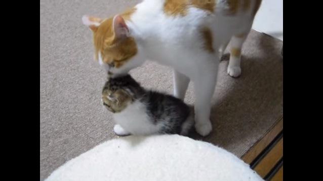 上から撮影した猫と子猫