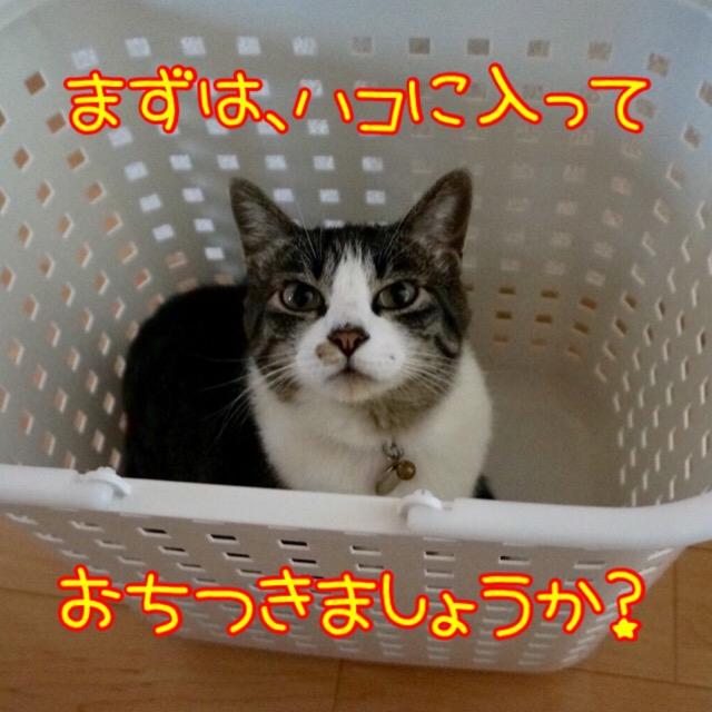 洗濯カゴの中で落ち着く猫