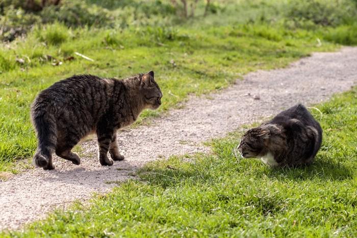 喧嘩してうずくまる猫