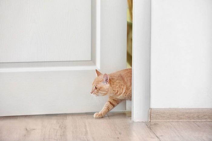 ドアから出てきた茶トラ猫