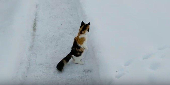 人間のように立つ猫