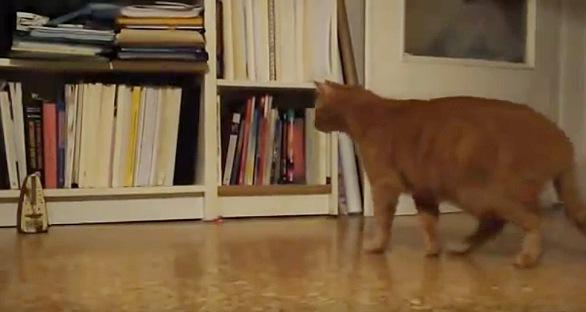メトロノームに近づく猫