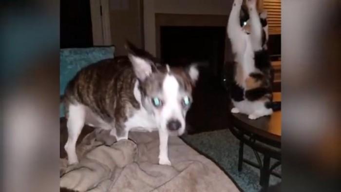 両手を上げる猫