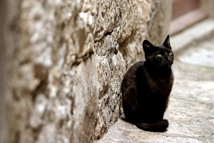 こちらを向いた黒猫