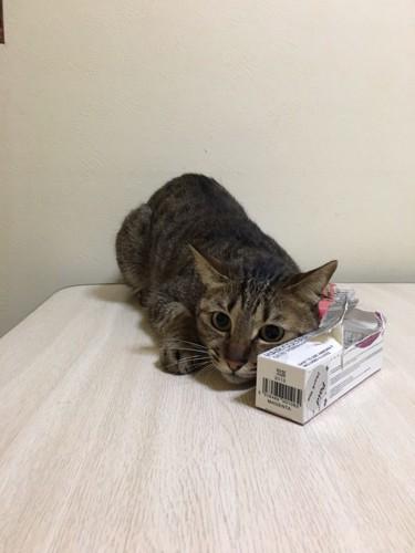箱の陰に隠れている猫