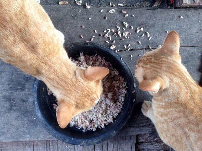 白米を食べる2匹の猫
