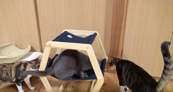 ハンモックに登る猫が気になる猫2匹