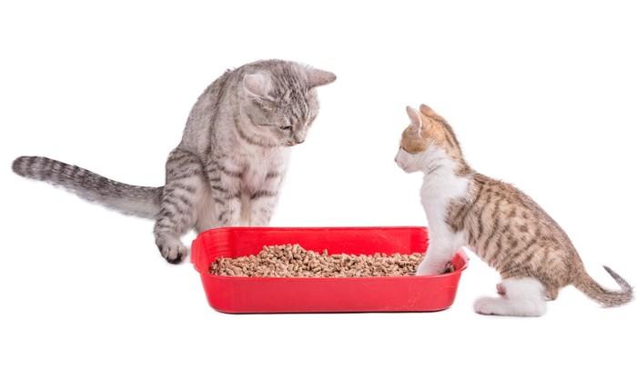 トイレを見つめる二匹の猫