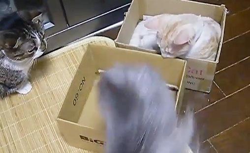 箱から出る猫
