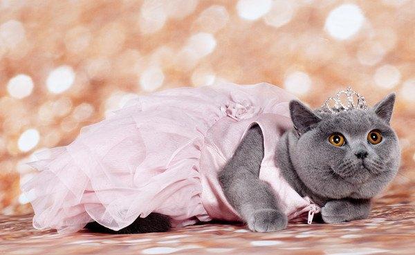 ドレスとティアラを身につけた猫