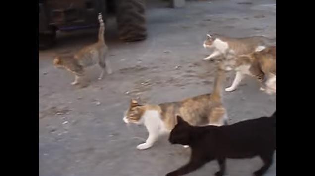 向かって左方向に歩く猫達(手前に黒猫)