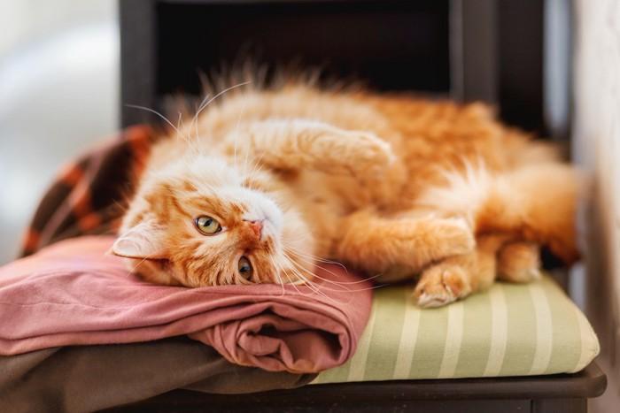 飼い主の服の上で寝転ぶ猫