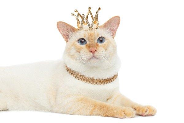 王冠をかぶった白猫