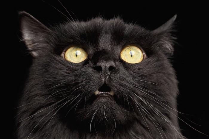 驚いた表情の黒猫の顔