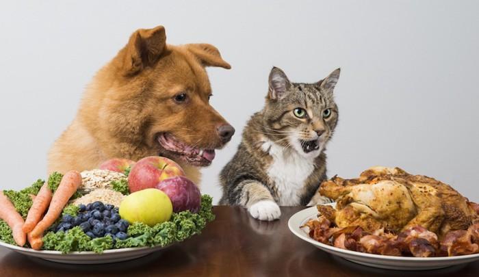 人の食べ物に夢中の犬と猫