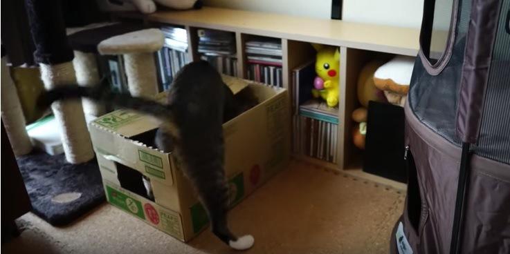 段ボールに乗る1匹の猫
