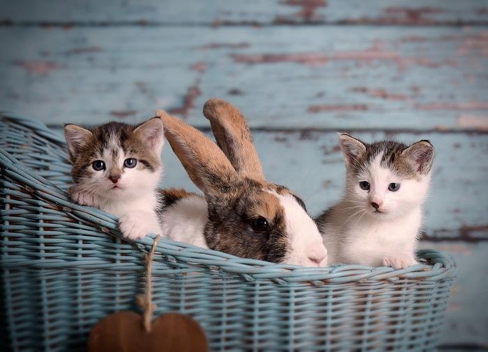 ウサギと仲良しな猫