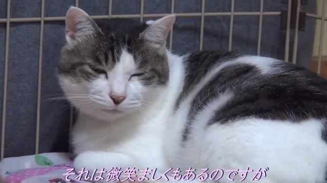 目を閉じた猫のアップ
