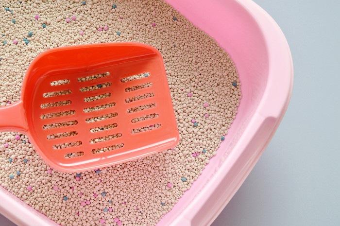 猫用トイレとシャベル