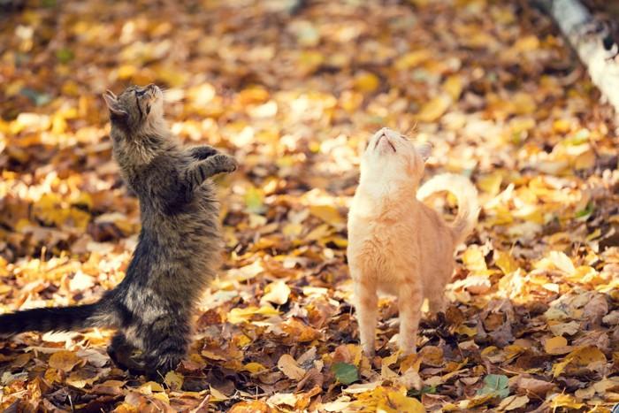 立ちあがろうとする猫