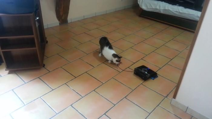 夢中になる猫