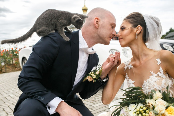 新郎新婦と黒猫