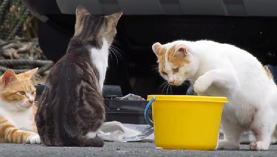 つられて覗き込む白い猫