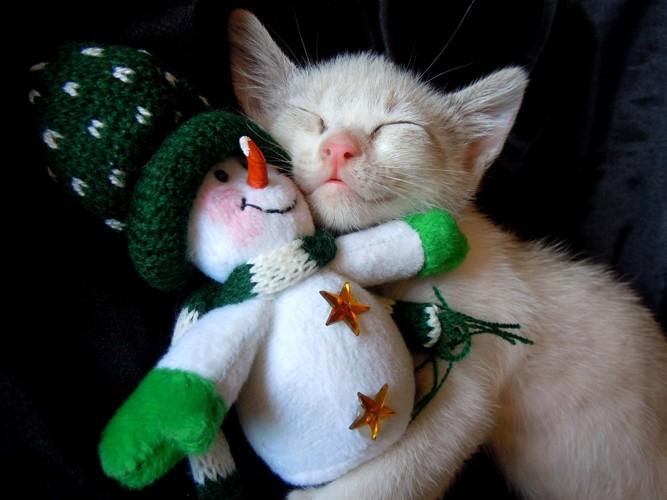 雪だるまのおもちゃを抱えて眠る子猫