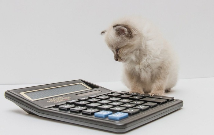 計算機と猫