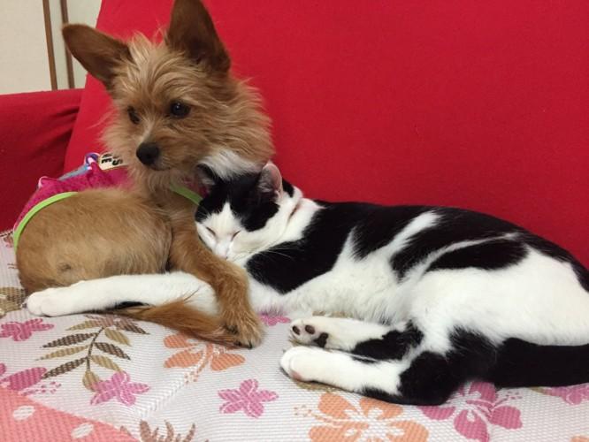 赤いソファで抱き合う犬猫